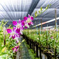 Aplicación Plantas ornamentales